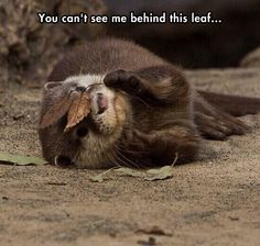 It must be in an otter place...