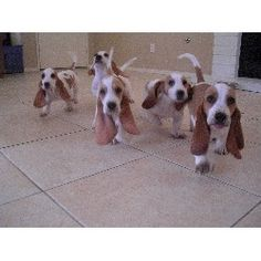 They shall attack you with their adorableness!!!