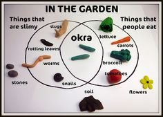 O is for Okra!