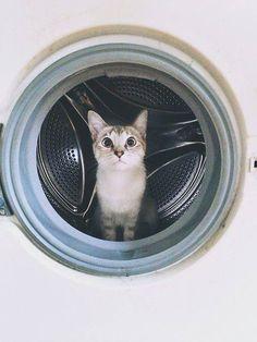 laundry kitty.
