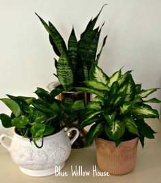 Houseplants to de-stress your home.