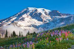 Mt Rainier in Washington