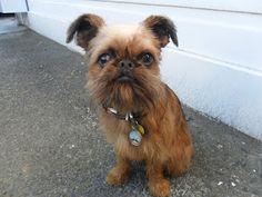 Digby Van Winkle's Blog -- He gives away presents to cute puppies!!!