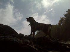 Chiresdog