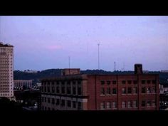 VIDEO: Chimney Swifts in Birmingham