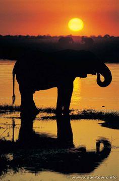 africa safari, elephants, anim, african safari, sunsets