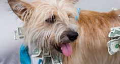 10 Ways a Dog Can Cost You Tens of Thousands of Dollars