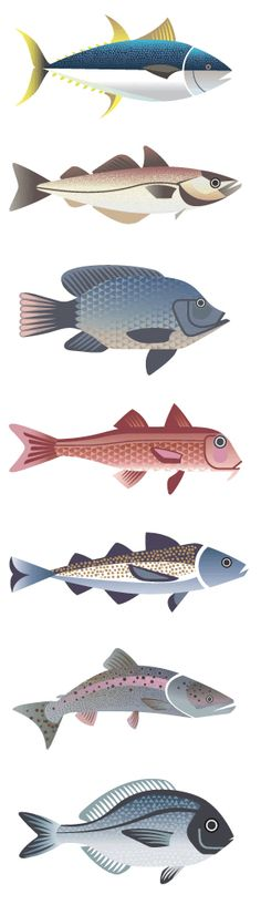 Illustrations for Selfridges' Project Ocean fish guide by Sanna Annukka