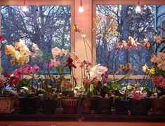 Attractive indoor plant light set up