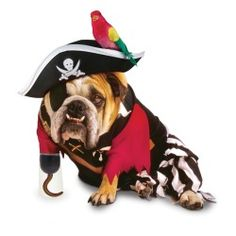 Pirate Sayings, Words, & Quotes bulldog, dog sayings, pet suppli, dogs, pirat dog, captain hook, dog halloween costumes, dog costumes, pet costumes