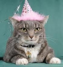 Charming party hats are the perfect pet topper for parties!  Available in pink or blue. $4.99 at www.FourPawAction.com