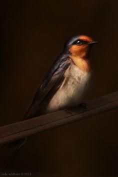 native & endemic by cally whitham, via Behance