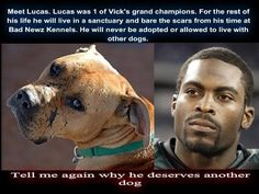 MEET LUCAS. Lucas was one of MICHAEL VICK'S grand champions. For the rest of his life he will live in a sanctuary & bear the scars from his time at with VICK. He will never be adopted or allowed to live with other dogs.  Tell me again WHY he deserves another dog?  :( kindly RE-PIN.   Only through re-posting will this stop & people will thus be aware that bad dogs came from bad owners. It's NOT the Breed, it was all bad deeds! Precious, sweet, loyal, faithful, gentle, loving, kind, adoring pups.