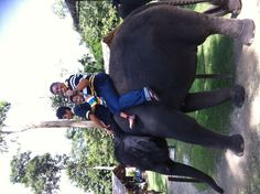 Kuala Gandah Elephant Sanctuary.