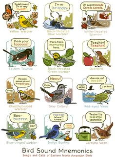 Bird Song Mnemonics: songs and calls of North American Birds---so helpful, especially if you're like us and forget migratory bird calls during the winter! #birds #birdsong