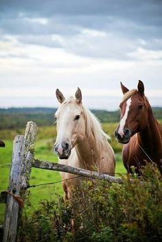 country life / sweet and simple / horses +
