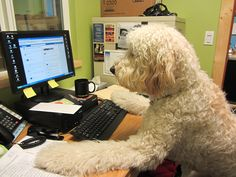 CR Doodle hard at work at the Ballard Food Bank Office. by MaryWit, via Flickr