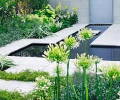 Contemporary twist to the classic white garden. white gardens, garden ponds, garden idea, small gardens, flower