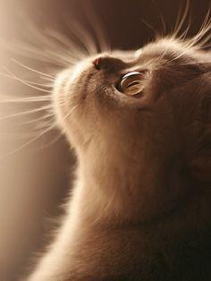 Kitty, kitty, kitty ...