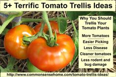 5+ Terrific Tomato Trellis Ideas  Gardening  Add comments Jun 202014  	  Tired of wimpy tomato cages? Check out these homemade tomato t...