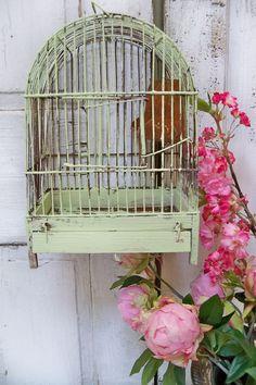 colorful flowers, bird garden, bird cage, birdcag, vintage birds