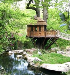 Amazing Snaps: Blue Forest: The World's Coolest Tree House house design, dream, tree houses, treehous, forest, backyard, place, garden, river