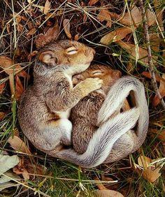Sleeping squirrels. I love squirrels!!