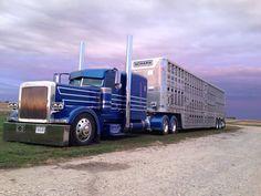 Blue Peterbilt cow hauler.
