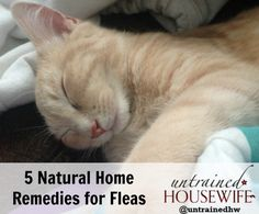 5 Natural Home Remedies to Treat for Fleas