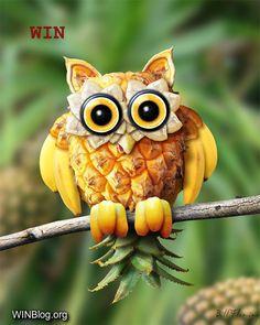 owl fruit art