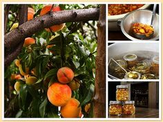 from tree to jar...peaches into salsa...recipe