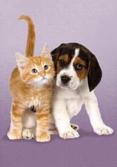Beagle Kitty Puzzle The Odd Couple by Clementoni