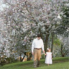 Cherry Blossom Festival in Macon...