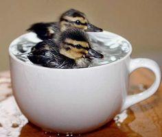 Duckies!!!