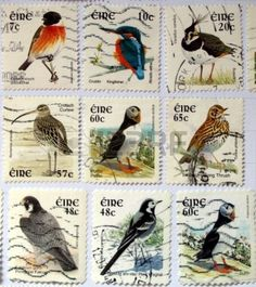 Range of Irish postage stamps with birds Stock Photo - 5440634