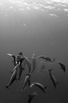 Girl swimming with dolphins - black and white photography - more on www.murraymitchell.com