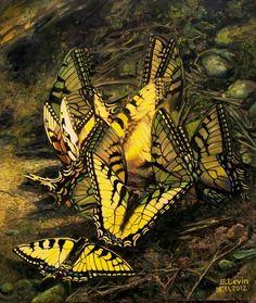 "Saatchi Online Artist: Sergey Levin; Oil, 2012, Painting ""Butterfly Dance"""