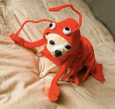 Dogs dressed as crustaceans