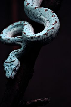 snakes are so sick