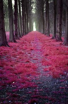 50 Of The Most Beautiful Places in the World (Part 5) | Gloholiday Mystic, Forests, Netherland, Tree, Path, Pink, Road, Place, Walk