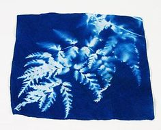 HOW COOL IS THIS! Its a Sunprints Cyanotype you make pictures with the sun or an enlarger!!! HOW COOL!