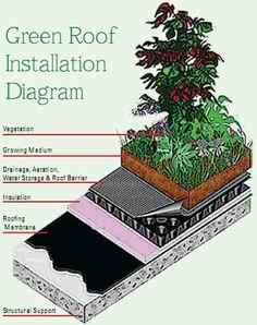 Green roof installation diagram