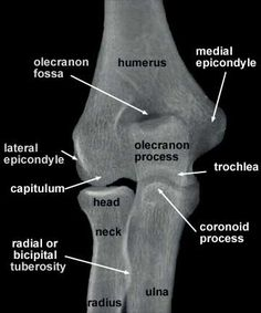 anatomy of radiograph of upper limb | Radiographs of the Shoulder, Elbow and Hand