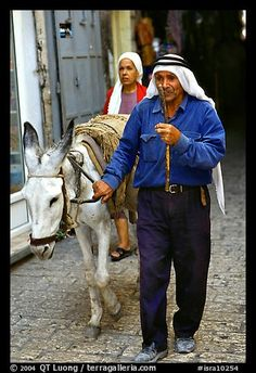 Arab man leading a donkey, Hebron. West Bank, Occupied Territories (Israel) (color)