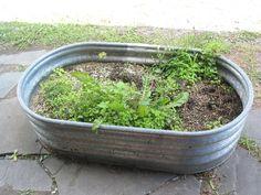 Tub as garden.