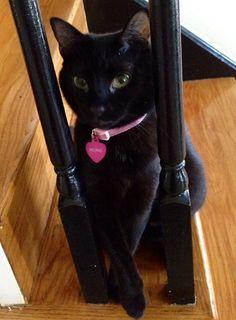 true ladi, black cats, legs, crosses, beauti ladi