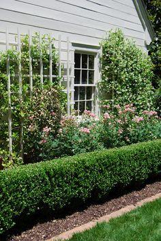 knockout roses + confederate jasmine