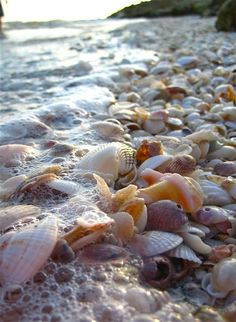 Sea shell covered beach. Blind Pass, Sanibel Island, Florida.