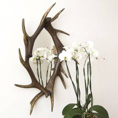 £158 + free delivery  Decorative Mirrors Online  This fabulous Antler Mirror emulates a classic antler trophy.    Ideal as a hallway mirror, or for a cloakroom, this framed mirror would make a great addition to your home. The unusual throwback to yesteryear with the antlers works remarkably well even in a contemporary setting. The mirror comes complete with hangers, weighs less than 10Kg and will be very easy to hang. Made from a high quality moulded resin. No deers involved!