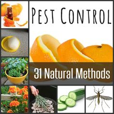 31 Natural Pest Control Methods